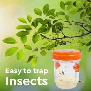 BEE COLINE – 2 Packs – Wasp Trap Outdoor – Solar Powered Wasp Killer for Hornets, Yellow Jackets and Wasps – Reusable Insects Killer